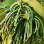 Young green beans – Madagascar